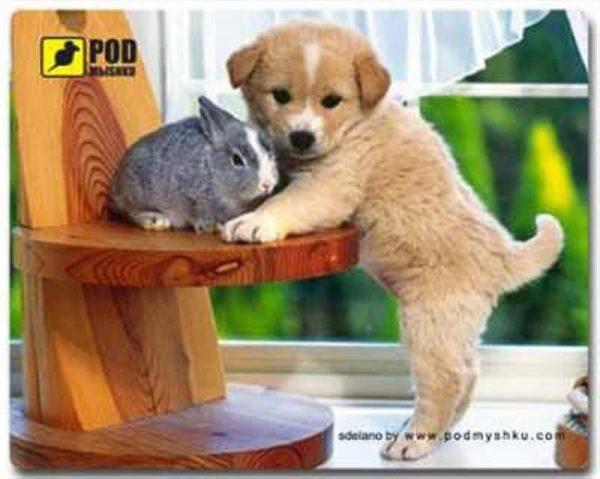 Килимок для миші Podmyshku Щеночек - купить в интернет-магазине Анклав