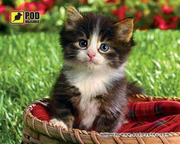 Килимок для миші Podmyshku Кошеня в кошику - купить в интернет-магазине Анклав